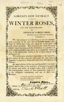 Lorenz's Winter Roses