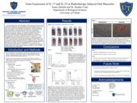 Gene Expression of IL-17 and IL-23 in Radiotherapy Induced Oral Mucositis