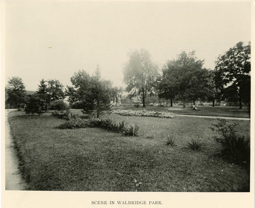 Scene in Walbridge Park. Photo of the natural growth in the park