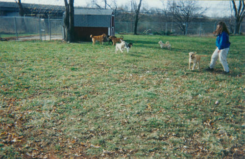 A set of four photos of the kennel.  ADAI leases the Swanton property of Downtown Toledo Kiwanis to operate its kennels with 22 dog runs