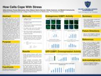 How Cells Cope with Stress