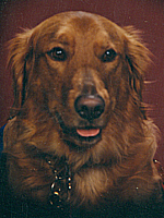 Assistance Dogs of America, Inc. Records, 1986-2007, MSS-175